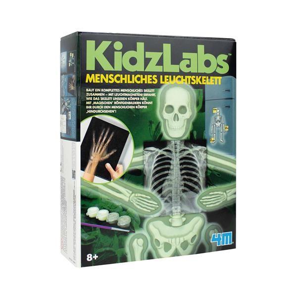 Human Skeleton - Modell des menschlichen Skeletts