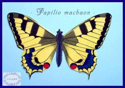 Karte mit schwebendem Schmetterling