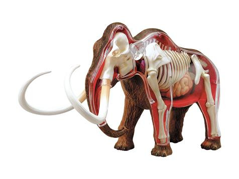 Anatomisches Tier Modell - X-ray Mammut