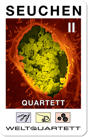 Weltquartett - Seuchen II